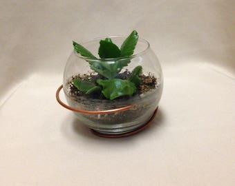 Modern Terrarium / Terrarium with Stand / Candle Holder with Stand / Copper Terrarium / Air Plant Terrarium / Succulent Terrarium