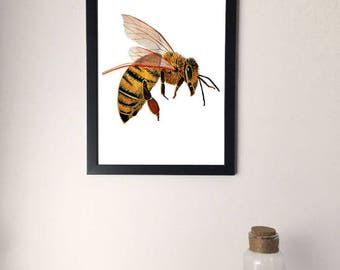 Framed Honey Bee Drawing/Painting, Unusual Artwork Print, Insect Study, Bug Picture, A4/A3