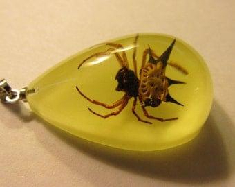 """Teardrop Pendant of Real Spider Encased in Resin, 1 1/4"""""""