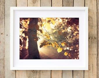 Woodland nature print, woodland fine art photography, woodland art print, nature photography, nature wall art, woodland photo, nature photo