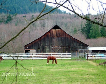 """Barn Photography, Horses, Country Picture, Farm Artwork, Old Buildings, Farmhouse Decor, Rustic Wall Art, """"Branch Ranch"""""""