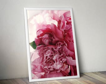 Peonies print, pink peonies, flower photography, Botanical print, plant print, nature photography, peonies photo, gift for her,