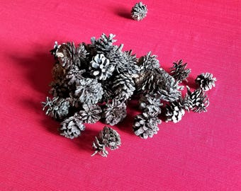 Natural Jack Pine Cones, Jack Pine Cones, Pine Cones, Home or Wedding Decor, Fall or Winter Decorations, Crafts Wreaths Ornaments Potpourri