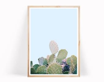 Succulent Print, Cactus Photo, Cactus Print Art, Cacti Print, Cactus, Botanical Print, Cactus Art, Cactus Printable, Cactus Desert Print