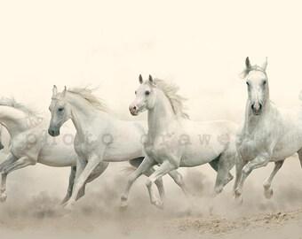 Horse Photo, Horse Print, Horse Poster, Horse Wall Art, Arabian Horses, Horses, Printable Art, Fine Art, Color Photography, Instant Download