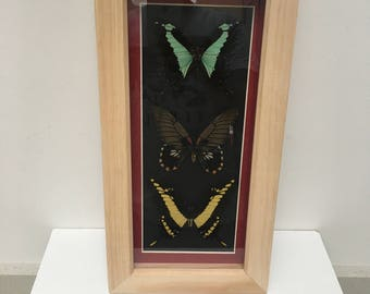 3x real butterflies /insect/taxidermy/Lepidoptera.