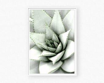 Succulent print, cactus print, botanical print, succulent wall art, green print, bohemian wall, cacti, cactus wall art, succulent photo
