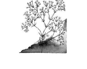 Black and White Gypsophila Pen and Watercolour Print