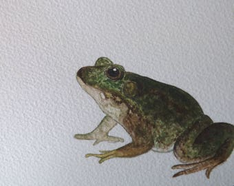 Handpainted Watercolour Frog, A5 Original Frog Painting