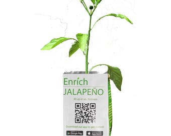 Jalapeno Grow Kit