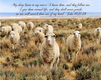 My sheep listen to my voice, John 10:27-28, bible verse prints for christian homes or office wall decor, digital art prints, christian gifts