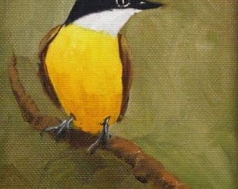 Bird, Kiskadee, miniature feathers, Barbara Haviland