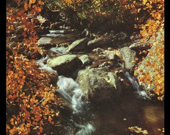 Autumn Stream Ruby Mountains Nevada 1961 Vintage Nature Art Photo Print Art Illustration Home Decor Wall Art Collectible Photo Print