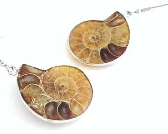 Caramel Fossil Earrings, Cephalopod Nautilus Science Jewelry, Ammonite Earrings