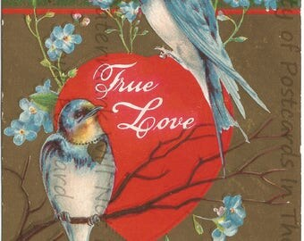 Blue Birds and Robin Egg Blue Forget Me Nots with Red Heart True Love Vintage Postcard