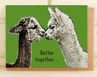 Alpacas Farm Love Anniversary Romantic Marriage Engagement