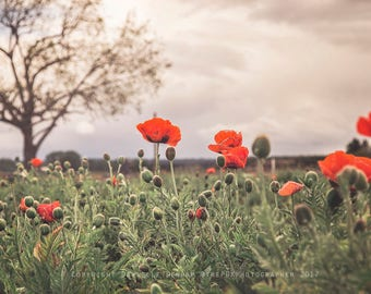 Nature Photography | Flowers | Landscape Photo | Poppy Field | Red Poppies | Country Decor | Flower Field | Oregon Photography