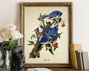 Vintage Botanical Bird Print, Blue Jay Print, Home Decor Art, Vintage Natural History Bird Art Decorative Blue Jay Audubon Reproduction B054