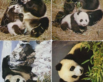 4 postcards of Giant Pandas Beijing Zoo China 1983
