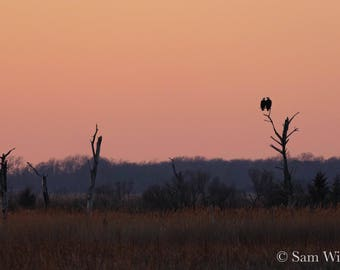 Bald Eagles at Winter's Twilight - A Crisp Winter Day on the Delaware Bay Marshes - Nature and Wildlife Photography Wall Art
