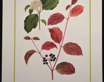 Dogwood Tree Print Flower Wall Decor Plant Nature Art