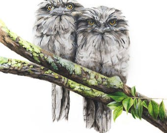 Bird Art - Tawny Frogmouth Art Print 8x10 - Frogmouth Art - Australian Bird Art - Australian Wildlife Art