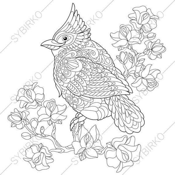 Louisville Cardinals Coloring Pages
