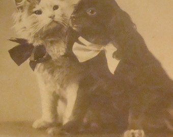 Vintage Antique RPPC (King Charles Spanial and Cat)