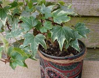 Ivy in a food can  planter decorated with ropes & fabrics /upcycled planter/ creative planter/eco friendly/ recycle lovers/plant lovers/ivy