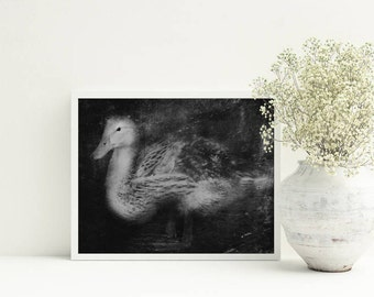 Picture with duck Duck photography PRINTABLE Black and white photo duck Wall art with duck Black and white wall art Animal photography arts