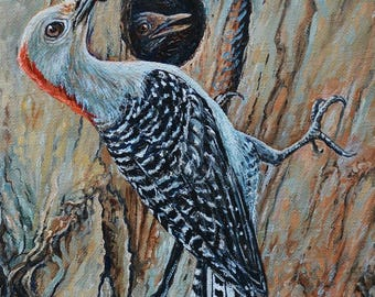 Red Bellied Woodpecker Feeding Her Young Oil Painting