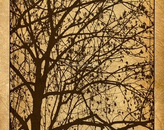Ljubljana Weeping Fine Art Print, Branches, Nature, Silhouette Art, Brown, Tan, Rustic Home Decor