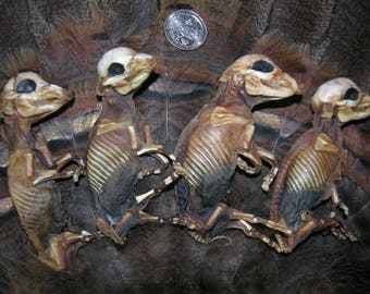 "The ""Fantastic Four"" Mummified/ Preserved/ Dried Fetal Piglets"