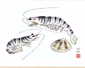 "Japanese handwitten drawing, Miyamae Hideki, ""Japanese tiger prawn"""