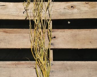 Curly willow branches, curly willow, natural willow, wedding decor, wedding supply, curly branch, curly twigs, dried willow , fresh willow