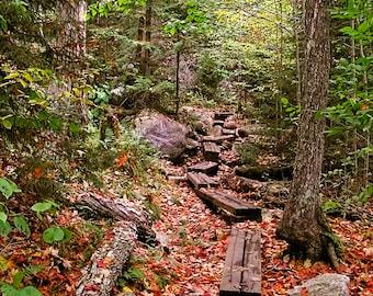 Adirondack Autumn Photography, Autumn Print, Fall Foliage, Hiking, Adirondack Decor, Home Decor, Wall Art, Adirondack Print, Nature Photo