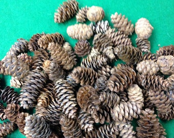 White Spruce Cones, Cones decorating, Cones crafts, natural, hand picked, cones for wreaths