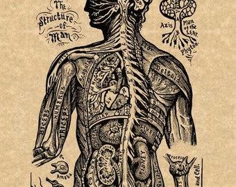 "Vintage Anatomy Art Print ""Nervous System - The Structure of Man"" Sivartha 1912 Antique Medical Book Illustration Steampunk Art"
