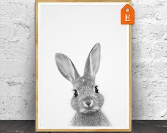 Rabbit Print, Nursery Animals, Nursery Animal Print, Nursery Print, Animal Print, Nursery Wall Art, Nursery Decor, Nursery Printable, Animal