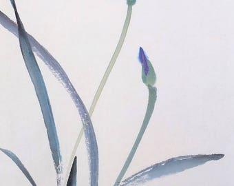 Adorable iris