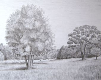 Meadow -- Graphite drawing