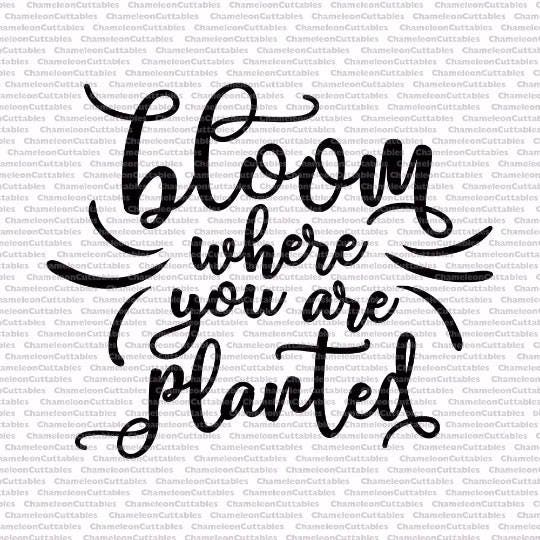 bloom where you are planted, quote, garden, flowers, svg ...