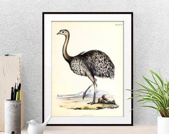 Big Bird Print - Animal Poster - Bird Wall Art - Vintage Illustration - Home Decor, Living Room Decor - Ornithology Print - Gift Idea