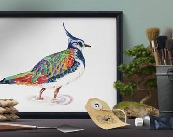 Lapwing Art Print, British Bird Wall Art, Colourful Bird Art, Cute Wading Bird Art, Lapwing Wall Art, Whimsical Bird Art, Lapwing Art