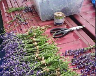 8 Fresh cut lavender bundles~harvested 5/28/17~wedding~favors~dried lavender