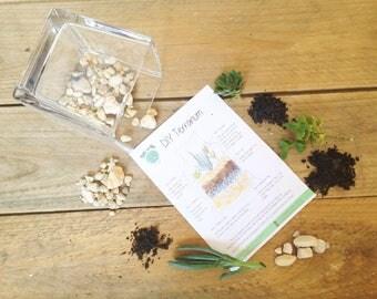DIY Terrarium Kit, Medium Glass Square Succulent Terrarium, Miniature Garden, Glass, Living Succulent Green Thumb Gift, Indoor Garden, Cubic
