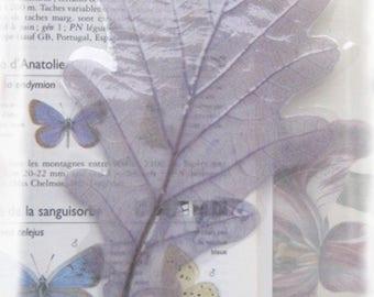 Bookmark or Interleave for creation: translucent blue oak.