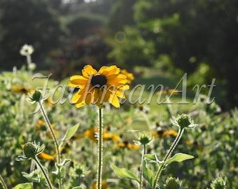 Sunflower Paradise