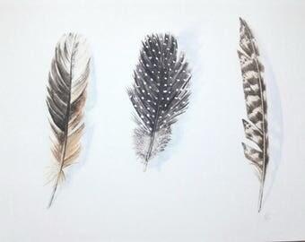 Feathers  - fine art print