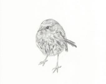 Robin - an original pencil drawing